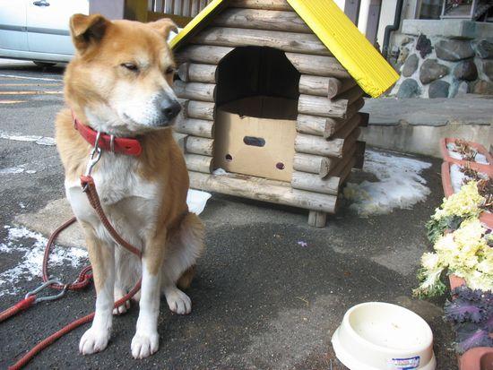 ムサシと犬小屋